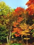 iu trees2