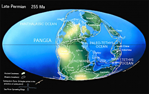 Pangea, 255 mya